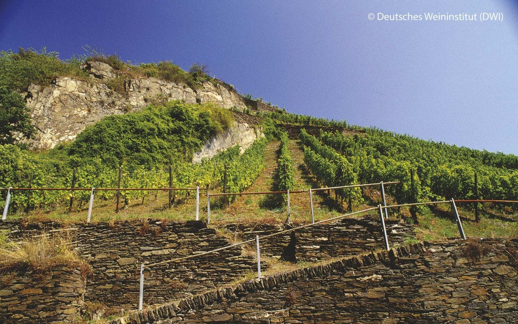"Vineyard and ""Altes Haus"" in Bacharach on the Rhine river."