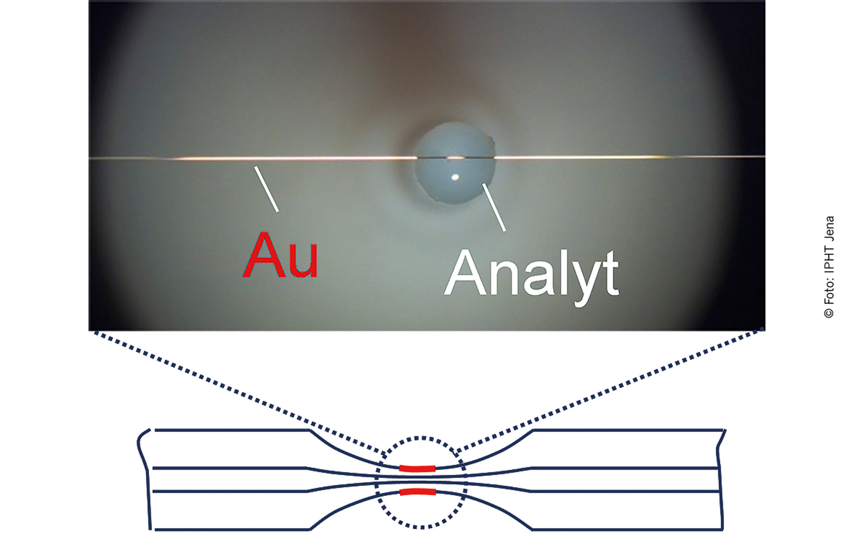 Fig. 4 Gold-coated optical fibre with analyte